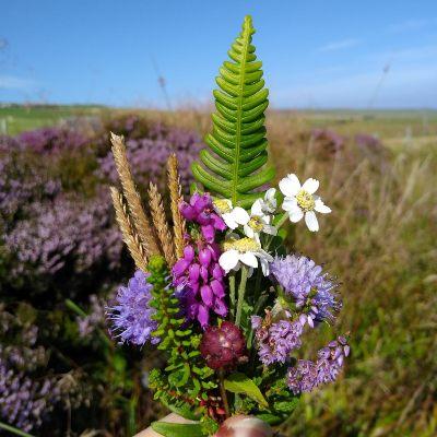 wildflowers-orkney-islands-summer