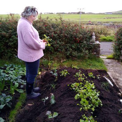 planting-our-hugelkultur-bed