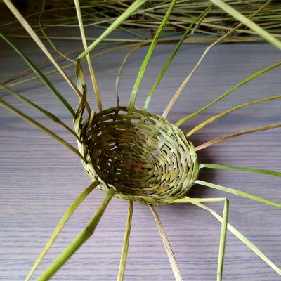 common-rush-basketry
