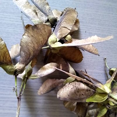 autumn-wreath-making-sycamore-seeds