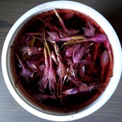 fuchsia-dye