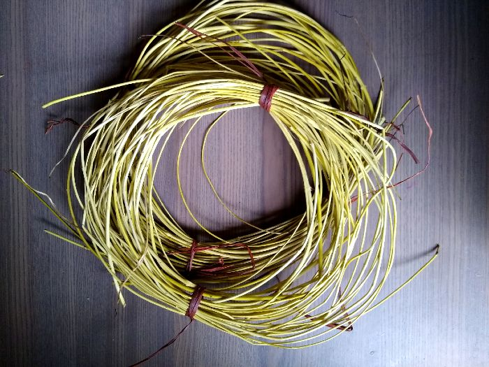 Harvesting Honeysuckle Vine For Basketry