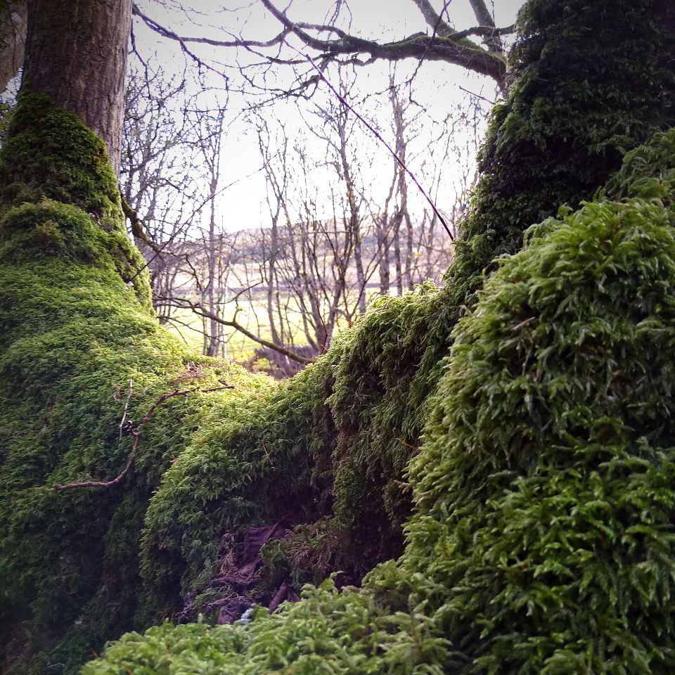 Binscarth-Woods-Orkney