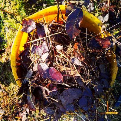 leaf-litter-for-no-dig-beds