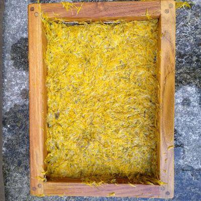 making-dandelion-paper