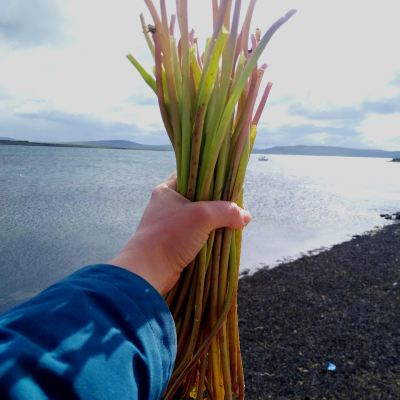 foraging-for-dandelion-stems