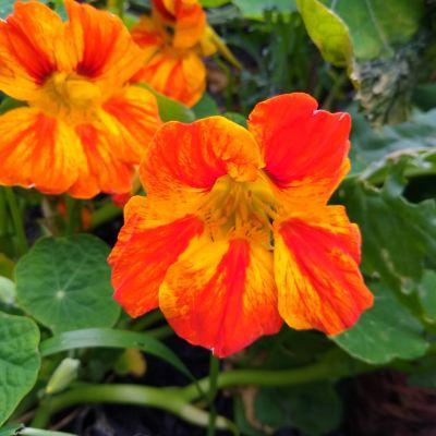 a-garden-full-of-flowers