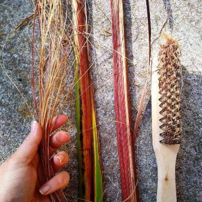 stripping-phormium-tenax-fibres-for-basket-weaving